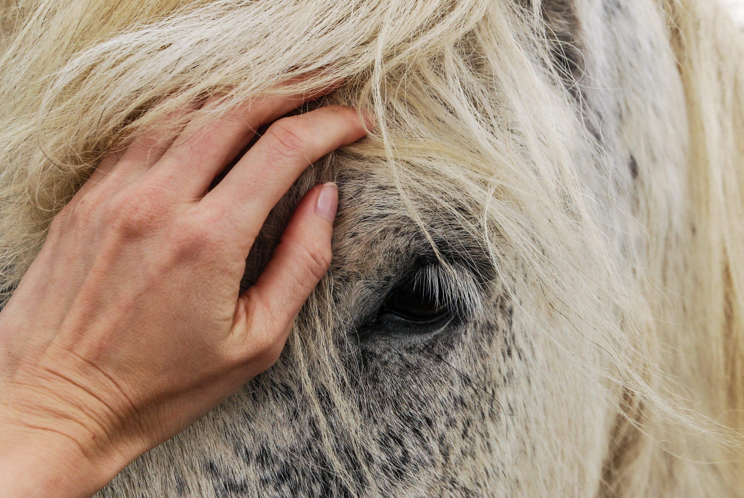 Pferdetraining Christine Wernle