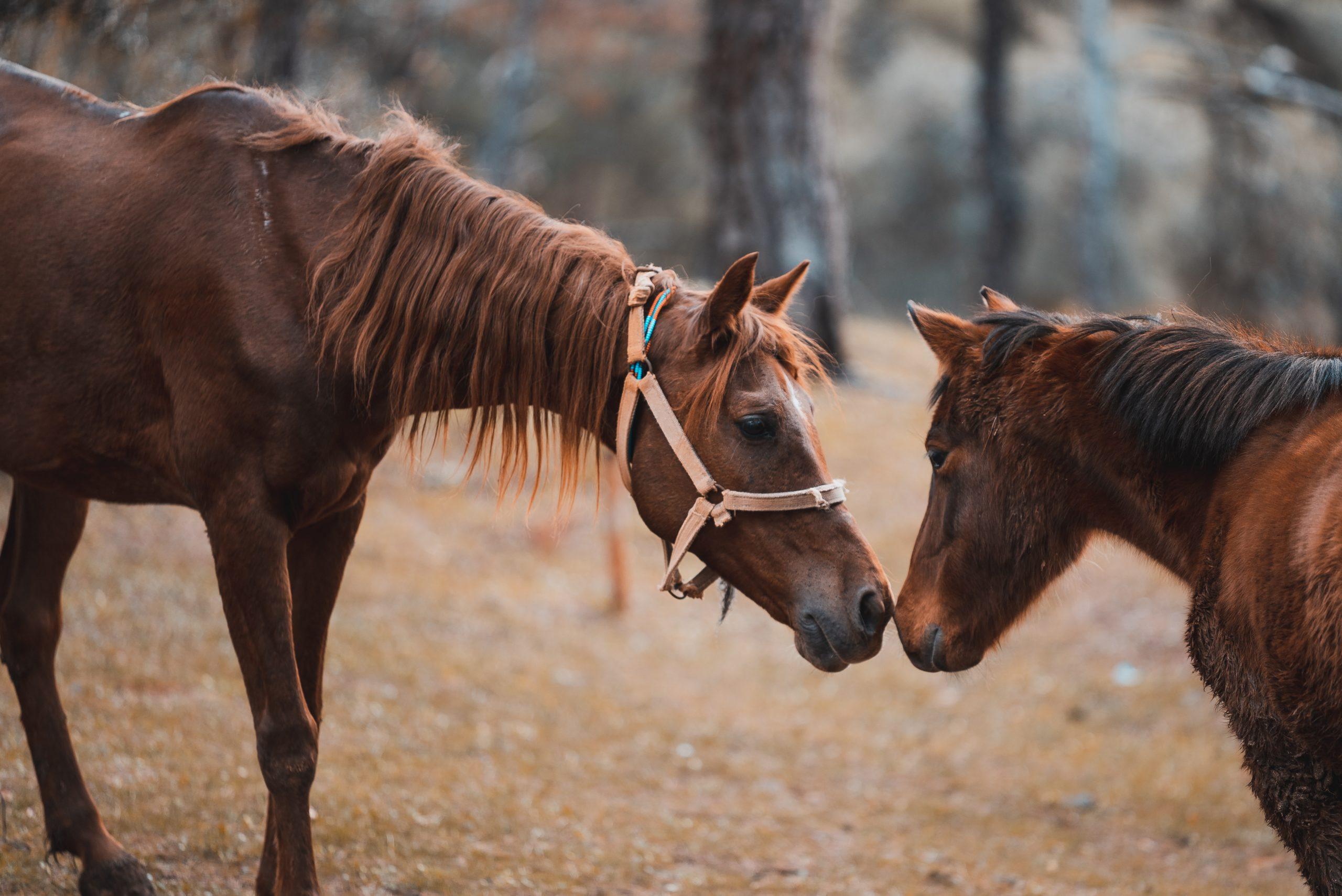 Pferde Training Wernle Pferdeprobleme Pferd Unterstützung